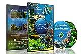 Aquarien DVD - 2 DVD Set Aquarien und Riffe des Ozeans mit farbenfrohen Korallen und Fischen