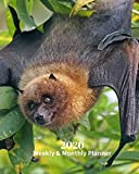 2020 Weekly and Monthly Planner: Black Bat - Monthly Calendar with U.S./UK/ Canadian/Christian/Jewish/Muslim Holidays– Calendar in Review/Notes 8 x 10 in.-Wildlife Animals Nature