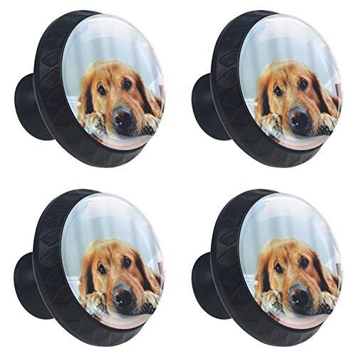 4 Pieces Set Cabinets Hardware Round Furniture Knobs Golden Retriever Dogs Print,Drawer Dresser Cupboard Wardrobe Pulls Handles for Home Kitchen