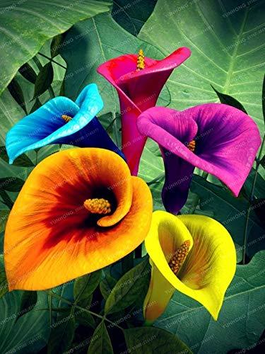 Polianthes tuberosa The Pearl duftend Blumenzwiebeln 1 Blumenzwiebel