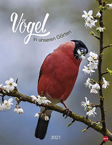 Vögel in unseren Gärten - Kalender 2021 - Posterkalender - Heye-Verlag - Wandkalender mit 12 bezaubernden Vogelportraits - 34 cm x 44 cm
