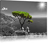 Mediteraner Baum am Mittelmeer schwarz/weiß Format: 120x80