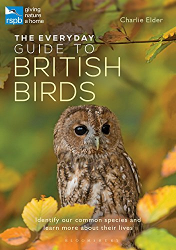 The Everyday Guide to British Birds: Identify our common species and learn more about their lives (English Edition)