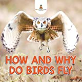 How and Why Do Birds Fly?