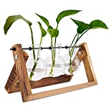 UWIOFF Propagation Stations, Desktop Glass Planter Bulb Vase Air Plant Terrarium with Wooden Stand, Plant Lover Gifts, Cute Glass Plant Holder for Hydroponics Plants Cuttings Indoor Office Decoration