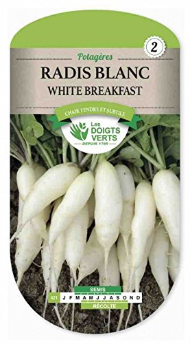 Les doigts verts Semence Radis Blanc White Breakfast