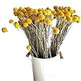 Joyfeel - Ramo de 30 Flores secas de caléndula Seca, Ramo de Plantas de jardín, Colores primarios Secos Naturales y Flores de caléndula