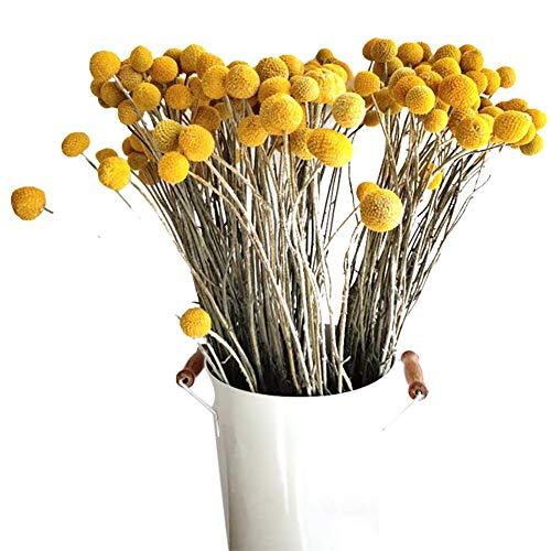 Renquen 30 flores naturales secas de flores naturales para decoración de césped seco, plantas de jardín secas y colores primarios
