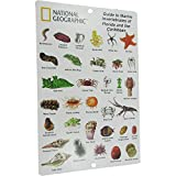 National Geographic - Guide to Marine Invertebrates of Florida and the Caribbean - Creature ID Card (6 in by 9 in)