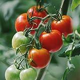 甘味と酸味のバランスが絶妙!プレミアムトマト おもいろトマト 1箱(約1.0kg)