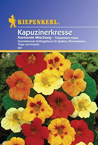 Kiepenkerl Rankender Kapuzinerkresse-Mix, 1 Tüte Samen