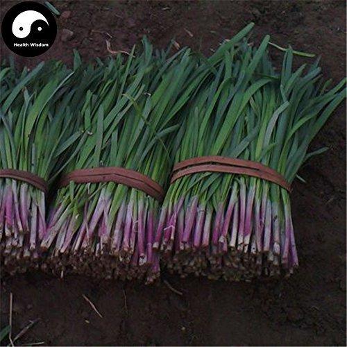 vegherb Kaufen Knoblauch-Schnittlauch Samen 800Pcs Pflanze Gewürze Gemüse Lila Wurzel Leek