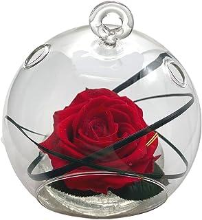 Rose Eternelle - La Vie en Rose - Vase Boule Verre - Rose Premium Stabilisée - Composition Florale (Rouge)