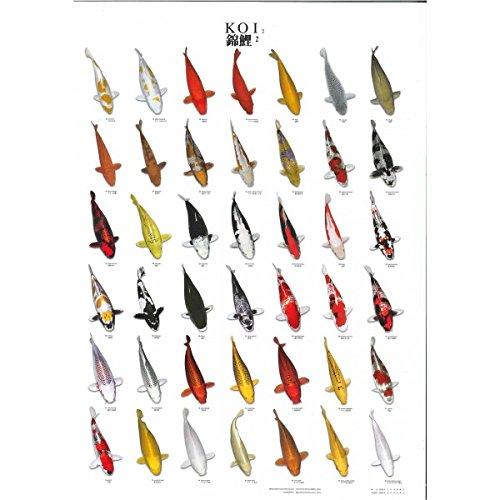 Aqualogistik-Koi-Poster Nr. 2 laminiert L 98 * B 68 cm