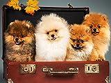 Erwachsene 1000 Teile Puzzle süße Katze und Hund kleines Tier Bild Puzzle Holzpuzzle Baustein Puzzle A.3 500pcs
