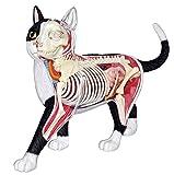 青島文化教材社 スカイネット 立体パズル 4D VISION 動物解剖 No.29 猫 解剖モデル 黒/白