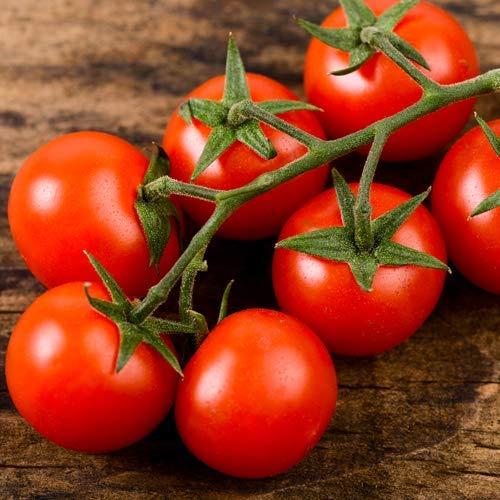 Cherry-Tomate Kirsch-Tomate 25 x Samen aus Portugal 100% Natur (Ohne Chemie) Massenträger mit vielen Früchten