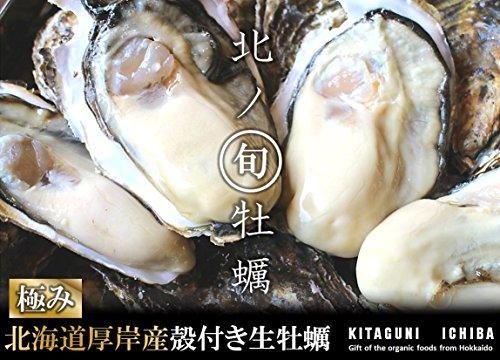 【北海道厚岸産 生牡蠣 殻付き 希少な三年牡蠣 3Lサイズ 40個 (150g〜200g/1個) 軍手・カキナイフ付】満天☆青空レストランでご紹介された厚岸の極上牡蠣! 世界中の食通をうならせる海のミルク。創業70年を誇る厚岸の牡蠣漁師より直送します。時に