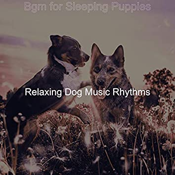 Bgm for Sleeping Puppies