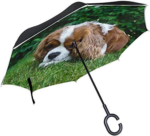 Paraguas grande invertido a prueba de viento doble capa de construcción invertida paraguas plegable para uso en coche con mango en forma de C paraguas de perro en hierba para mujeres y hombres