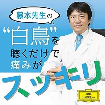 """藤本先生の""""白鳥""""を聴くだけで痛みがスッキリ"""