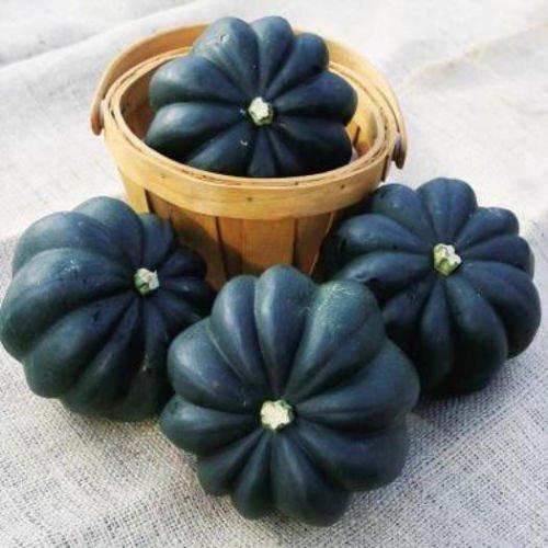 Graine de squash, Table Acorn King, courges d'hiver Graine, Non-GMO Heirloom Squash 35CT