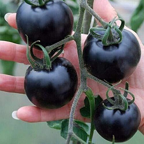 AGROBITS Mélanger les couleurs de tomate Graines Jardin & amp 50pcs; Accueil Semences Potagères Violet Bleu facile Semer les graines agriculture Tomates: Noir