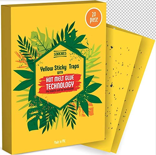 Fruit Fly Traps Indoor 20 Pack - Gnat Traps Indoor - Gnat Killer for Indoor - Fruit Fly Killer -...