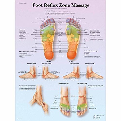 3B Scientific Lehrtafel Fussreflexzonen-Massage