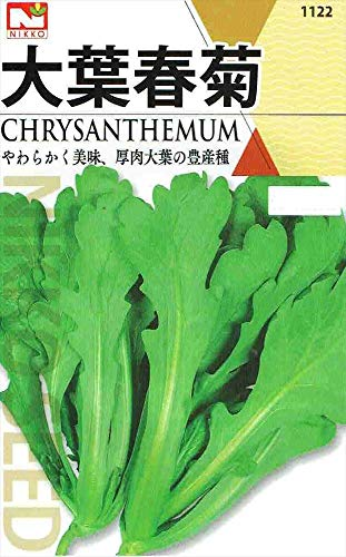 【種子】 大葉春菊 [1122]