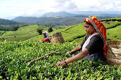 JT ミント&フレッシュ ロンネフェルト 認定店 紅茶 ギフト 茶葉 ブランド 高級 新発売 新製品
