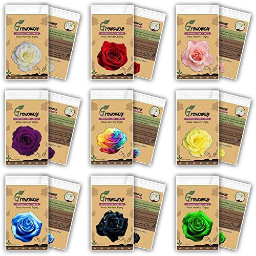 VISA STORE (ESTA ORDEN INCLUYE 9 PAQUETES cada color) 50 semillas semillas de Rose - Semillas del arco iris Negro Rosa Púrpura Rojo Verde Rose
