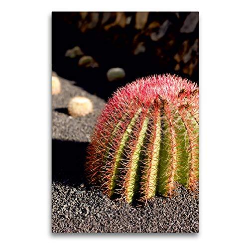 CALVENDO Premium Textil-Leinwand 60 x 90 cm Hoch-Format Sonnenhungriger Kaktus mit hübschen roten Stacheln, Leinwanddruck von Elke Kunkel Fotografie