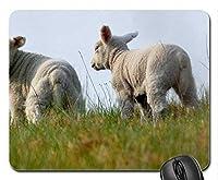 羊マウスパッド、マウスパッド(羊マウスパッド)