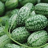 Mexican Miniature Watermelon Seeds Organic Cucamelon Mini Sour Gherkin 15+ Seeds