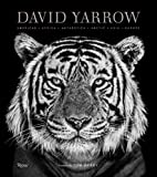 David Yarrow Photography: Americas Africa Antarctica Arctic Asia Europe - David Yarrow