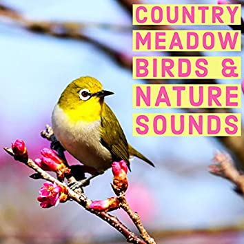 Country Meadow Birds And Nature Sounds - Ambient Wildlife For Study And Relaxation