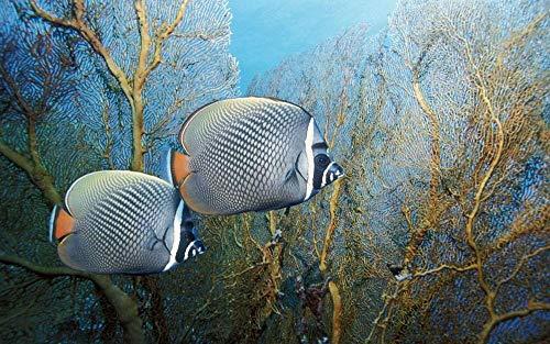 Olieverfschilderij digitaal om zelf te maken tropische vissen in het aquarium creatief geschenk schilderij huisdecoratie handgeschilderd op canvas 40 x 50 cm