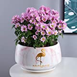 Faturt Creativo di Pietra del Reticolo Fashion Flower Pot Europeo Ceramica Vaso di Fiori con Vassoio Giardinaggio Bacino del Family Office Decorativo Vaso Flower Pot (Color : Rosa, Dimensione : S)