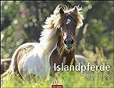 Islandpferde - Kalender 2020 - Weingarten-Verlag - Sabine Stuewer - Wandkalender - 44 cm x 34 cm