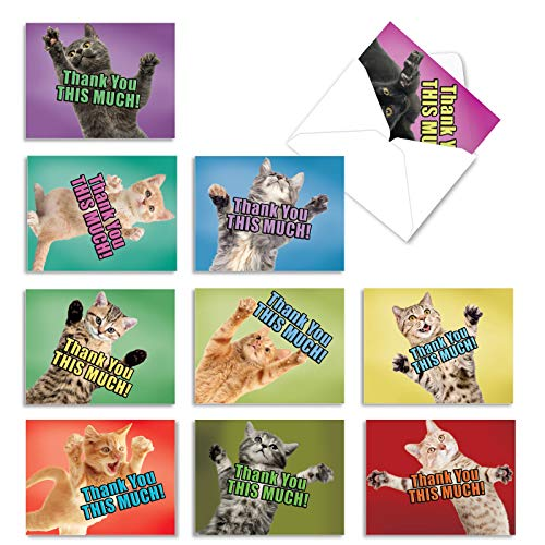 """10 Funny Cat Thank You Note Cards, 'Cat Big Thanks' Cat and Kitten Stationery with """"Thank You This Much Message, Blank Mini Cards with Envelopes 4 x 5.12 inch M2368TYB"""