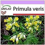 SAFLAX - Primavera - 100 semillas - Primula veris