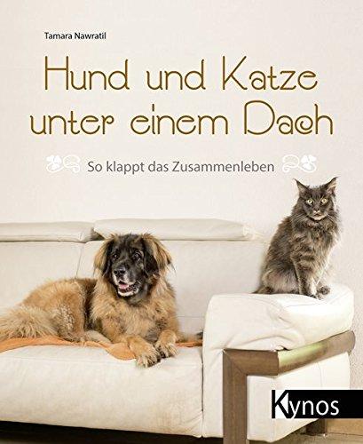 Hund und Katze unter einem Dach: So klappt das Zusammenleben