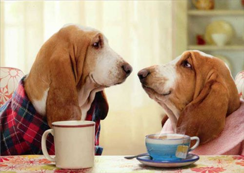 Bassett Couple Nose To Nose Funny Dog Valentine's Day Card
