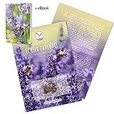 300x Lavendel Samen mit hoher Keimrate - Vielseitig einsetzbare Heilpflanze & ideal für Bienen und...