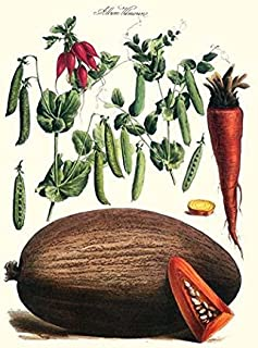 Vegetables Peas in pods raddish carrot & melon Illustration from a famous French seed catalog and the vegetables that can ...