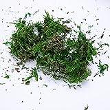 Plantas biónicas 1000 g/Bolsa de Moss Verde Ver Verde Moss Artificial Fallo Falso Turf Accesorios Accesorios Decorativos Plantas Hierba Hogar Jarrón Decoración Arbustos Verdes (Color : 1000g)