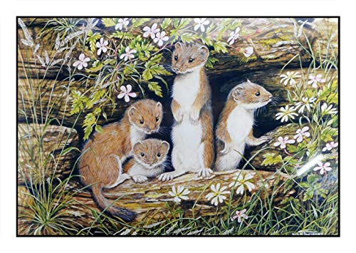 N / A James Hamilton 1000 T. Puzzle 68 x 49 cm Hermelin Wiesel Mader Baby Stoats 1002