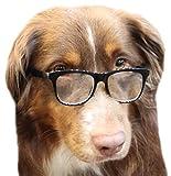 G004 Dog Pet COSTUME Prop Retro Glasses Medium Breeds 20-40lbs (Black-clear)