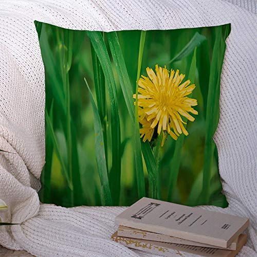 Decorative Throw Pillow Case Green Up Attribute Beautiful Small Yellow Dandelion Taraxacum Officinale Miscellaneous Agriculture Cushion Cover Pillowcase for Lumbar Home Decor 18x18 Inch
